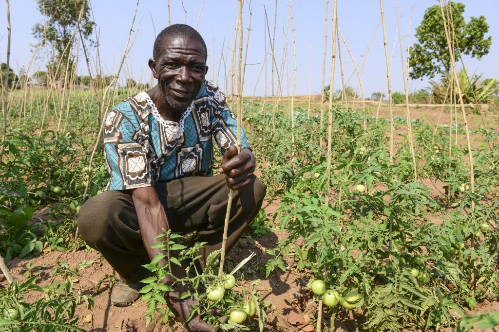 Malawi, Thyolo, NGO CARD Churches Action in Relief and Development, Bewaesserungssystem im Dorf Samuti, bewaesserte Gemuese Felder mit Tomaten vonFarmer John Chimwaye, 56